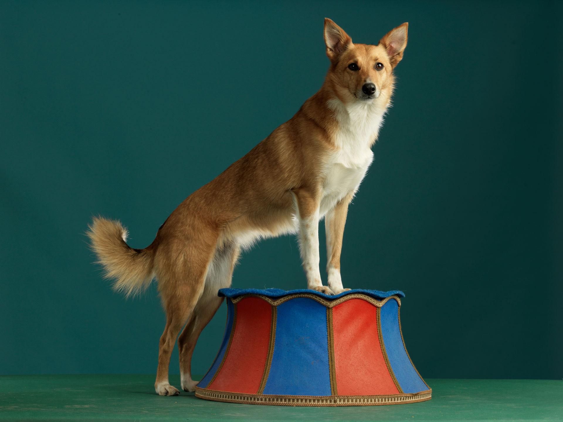 Hundezirkus Bremen Stadthund