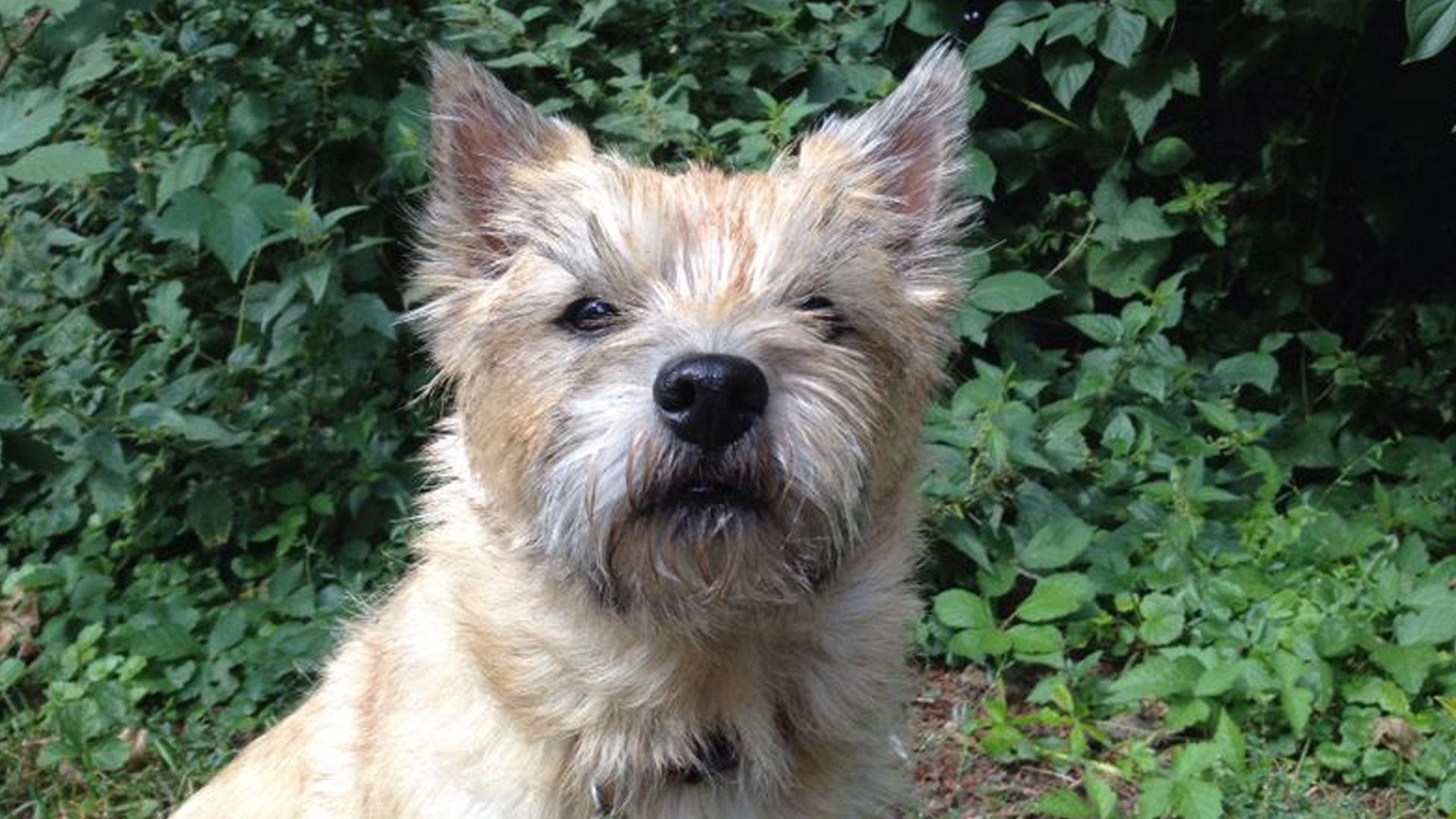 Elfi Kern Terrier Stadthund