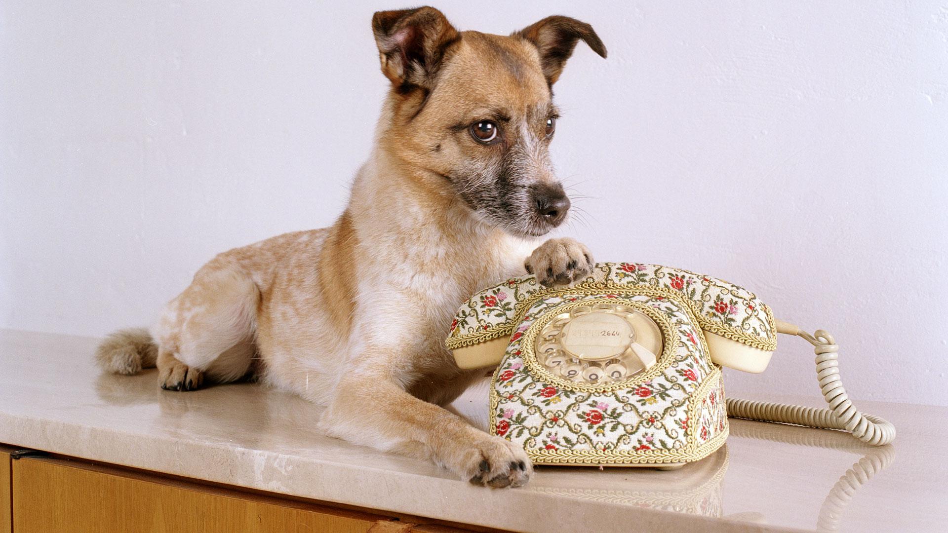 Jacomo am Stadthund Telefon
