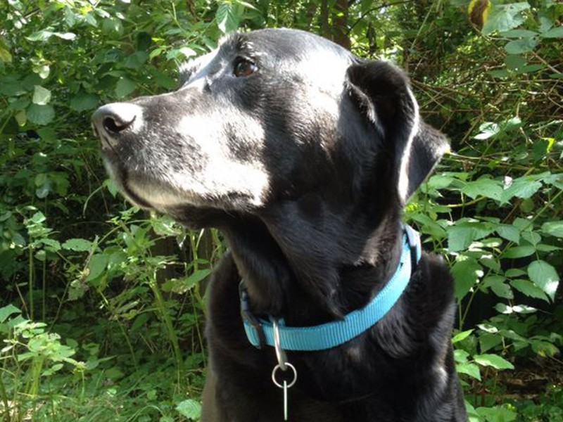 Sally Stadthund