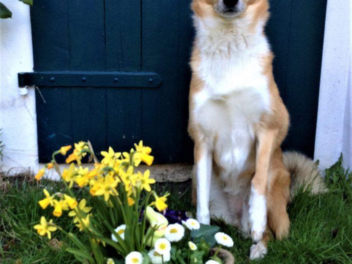 Vorsicht Frühling!