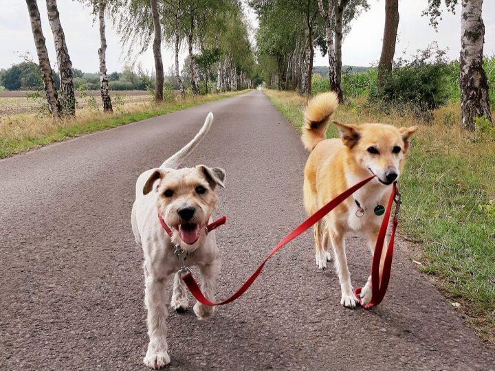 Steuer sparen für Hundebesitzer…