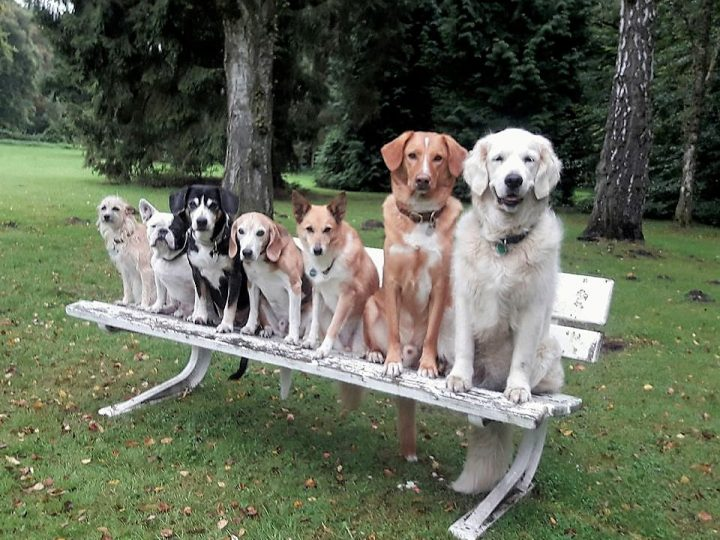 Intensivkurse für Quereinsteiger und junge Hunde ab dem 6. Monat