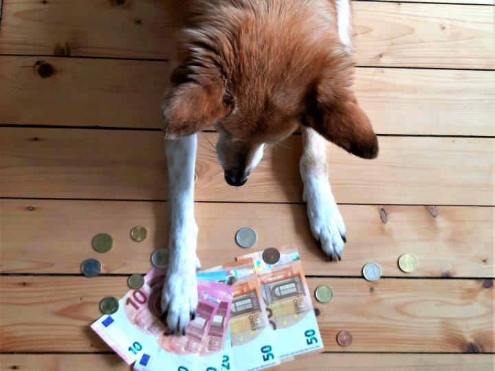 Hundekosten – Steuern sparen!