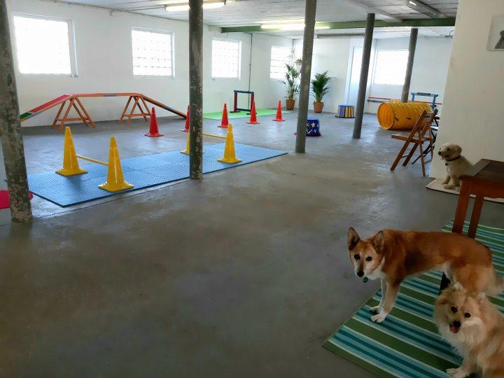 Hurra, das Stadthund-Studio ist da…