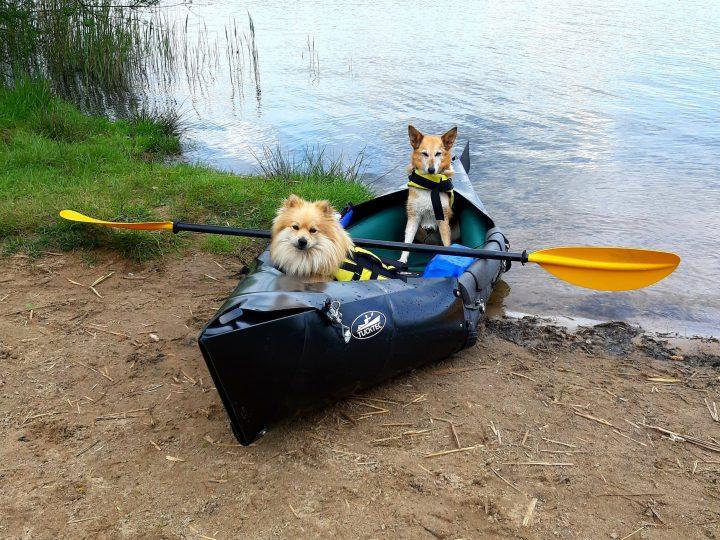 """Workshop: """"Bootshund"""". Kanutraining für deinen Hund und Dich."""
